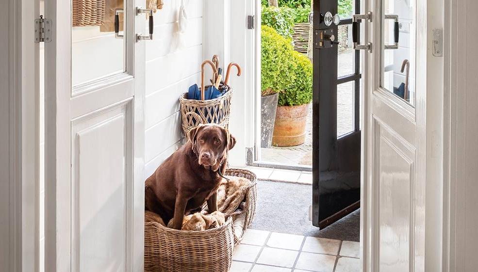 Acondiciona tu hogar para tu mascota